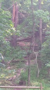 Tumbling Trees