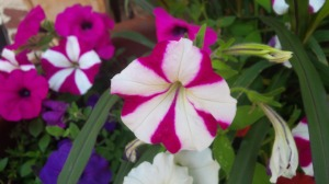 Circus Tent Flower