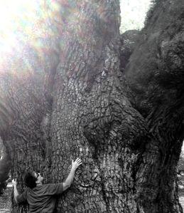 Tree and me