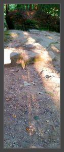 Shadow Hike