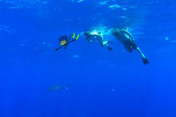 Sharks. Hawaii. Swimming. Ocean.