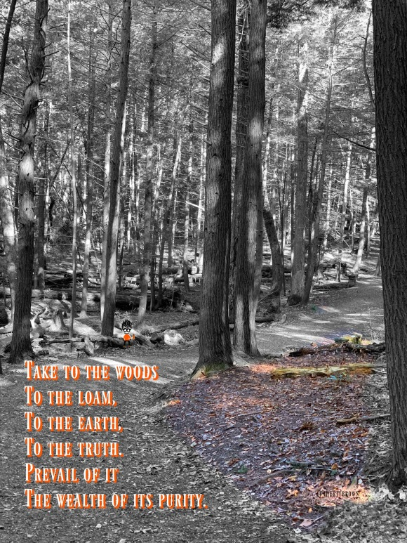Loam, Woods, Path, Trail, Nature