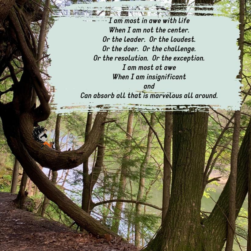 Insignificant, Tree, Explore