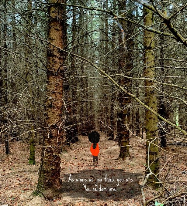 Ireland, Walk, Woods