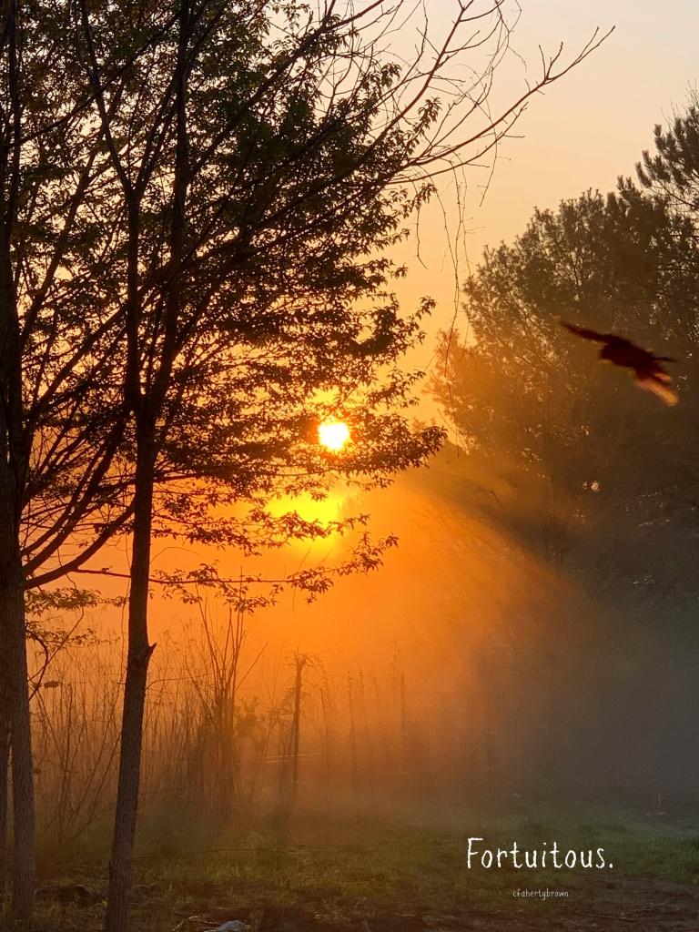Sunrise, Photography, Bird,